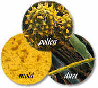 pollen mold dust image